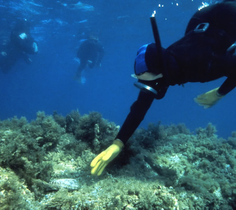 snorkeling-catalina-island